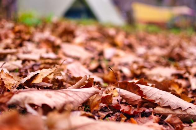 落ち葉とテント