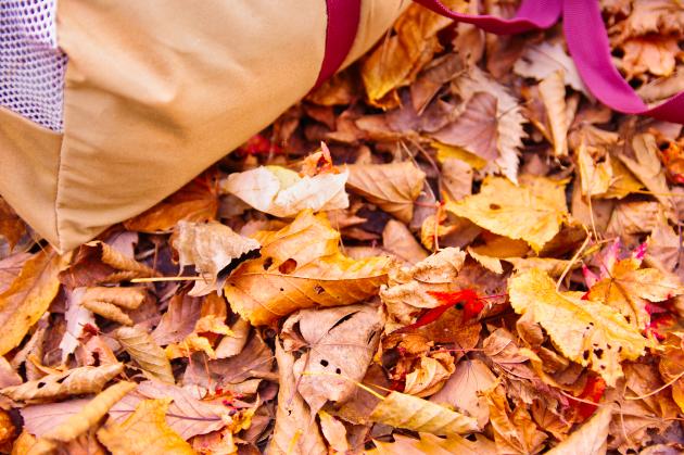 落ち葉の上でキャンプ