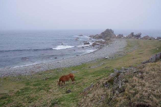 尻屋崎の海岸に立つ寒立馬