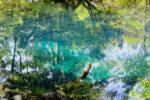 平成と令和をつなぐファミリーキャンプ旅 神秘の丸池様