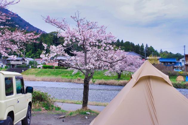 粕川オートキャンプ場 雨と桜とソロキャンプ