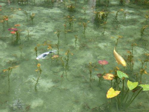 池 モネ の
